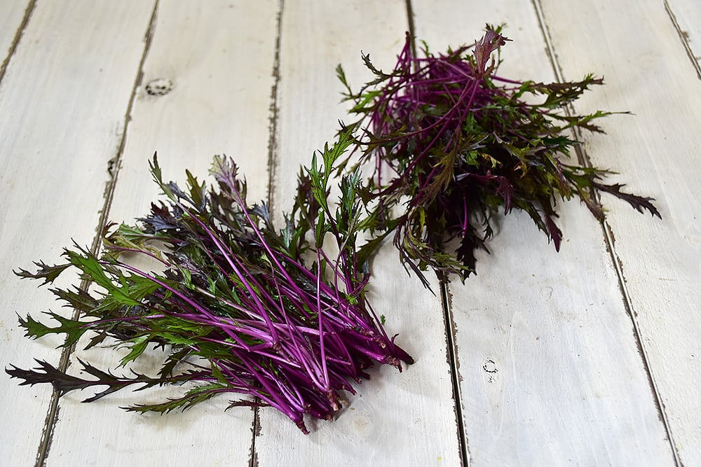 明星さんのベビー赤水菜 (石川県産)