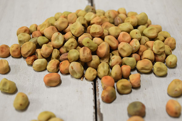 児島さんの乾燥ツタンカーメン豆(兵庫県産)