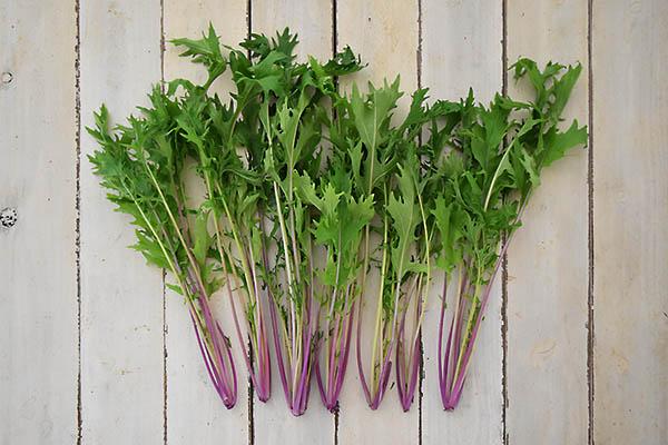 肥後やまとさんの有機赤水菜(熊本県産)