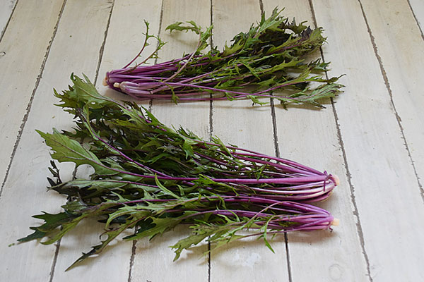田邊さんの赤水菜(広島県産)