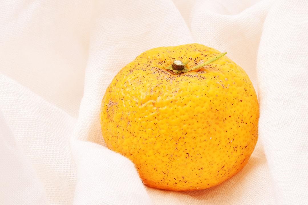 吉本さんの柚子(高知県産)