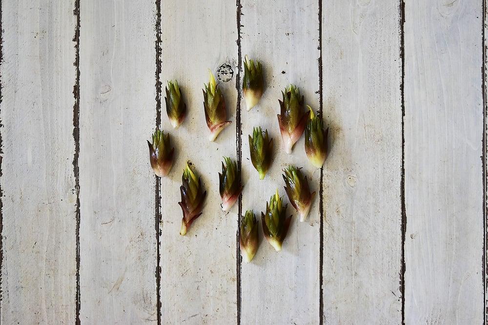 植月さんのミョウガ(岡山産)