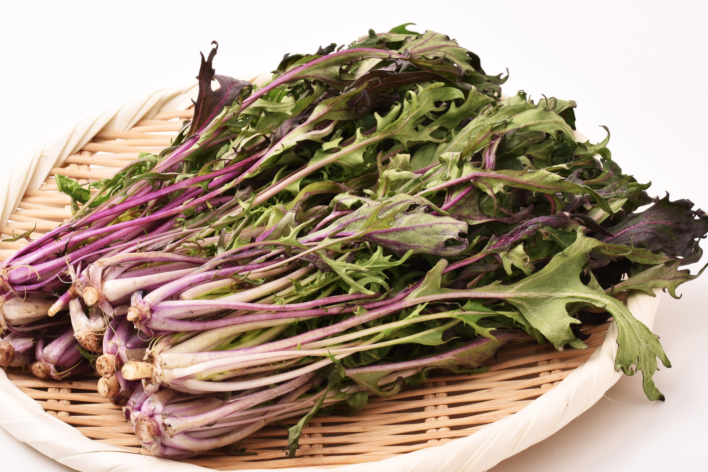 大島さんの赤茎水菜(長野県産)