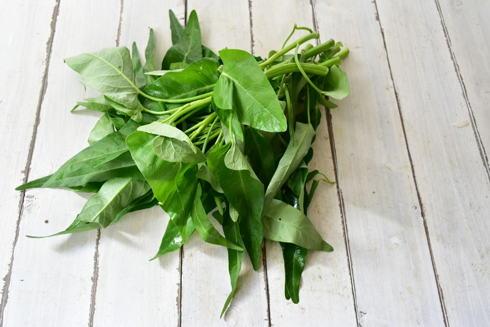 赤穂さんの空芯菜(京都府産)