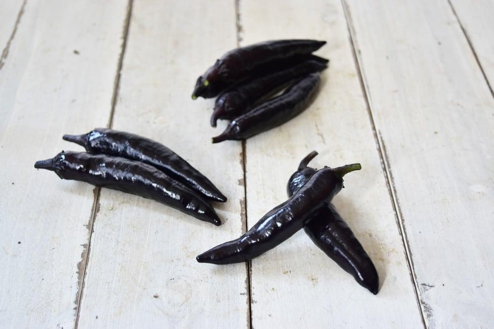 赤穂さんの紫唐辛子(京都府産)