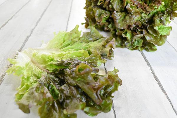 瀬戸さんの赤丸サラダ菜(愛媛県産)