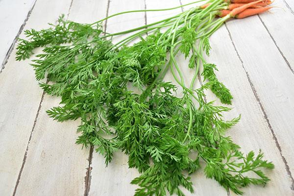 西前さんの人参菜(奈良県産)