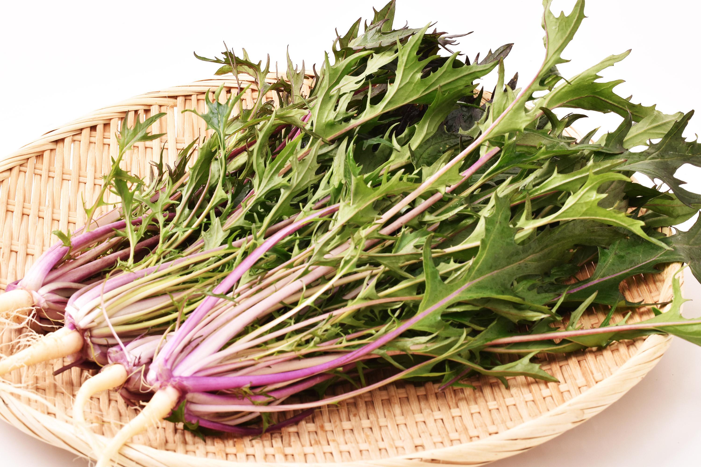 高橋さんのサラダ赤水菜(大阪府産)