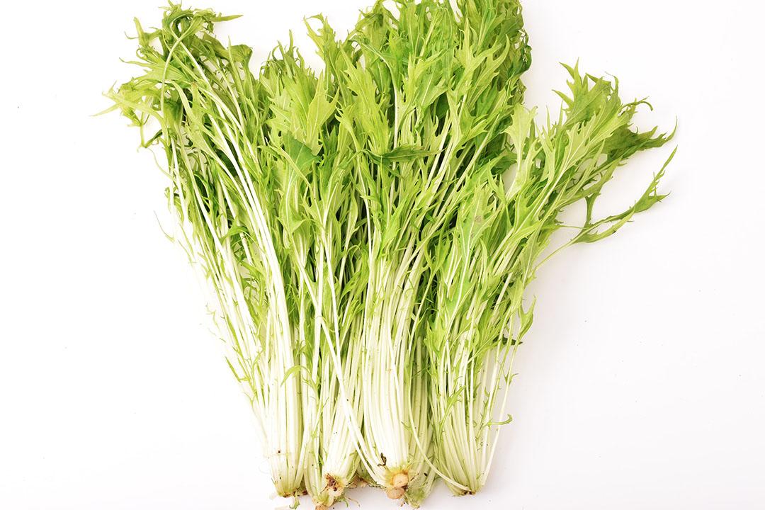 寺岡さんの水菜(広島県産)