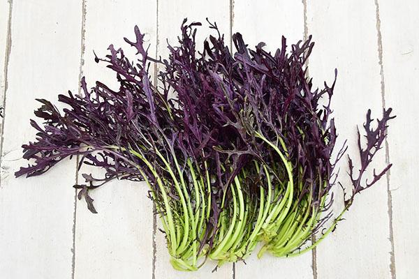 戸島さんの赤からし菜(山口県産)