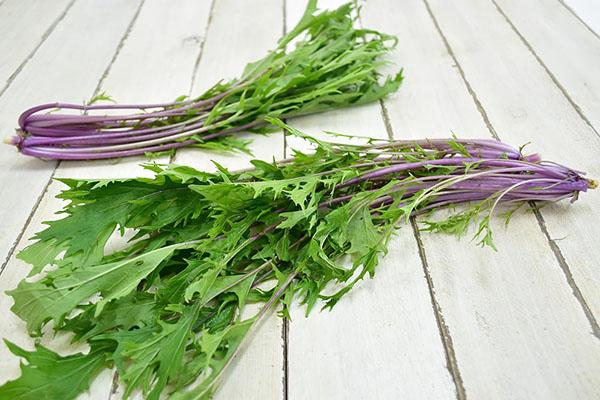 戸島さんのベビー赤軸水菜