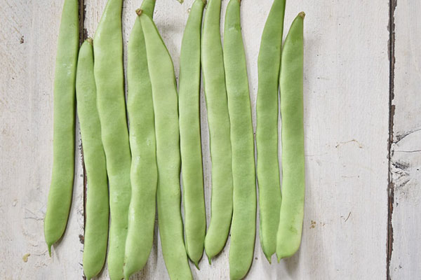 戸島さんのモロッコ豆(山口県産)