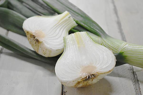 戸島さんの葉つき白玉ねぎ(山口県産)